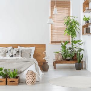 """Bất ngờ với  """"loại cây quang hợp ngược"""" nhả oxy ban đêm giúp cải thiện giấc ngủ"""