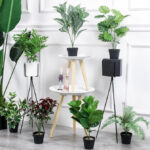 8 siêu cây hút khí độc nên trồng ngay trong nhà