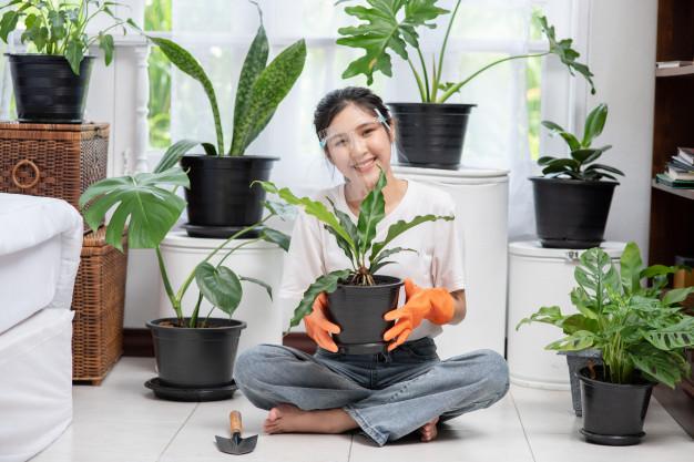 8 cách chăm sóc cây cảnh trong nhà để cây luôn xanh và phát triển tốt